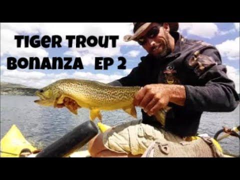 Tiger Trout Bonanza Episode 2