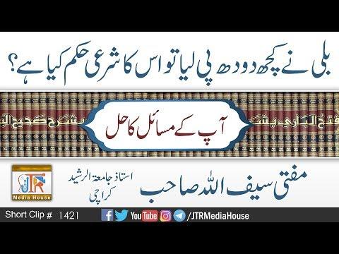 Billi Ney kuch Dowdh Pee Liya To Kya Hukam Hay ? | Jamia-Tur-Rasheed Pakistan