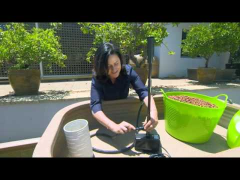 How to Build and Create an Aquaponics System