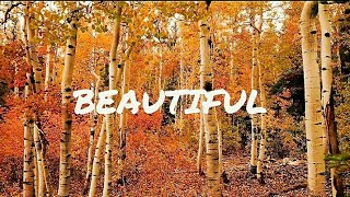 Inspirational status video about life//4K video//AUTUMN//Nature//Motivational quotes