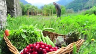 BKK Ernährungsakademie - Die mediterrane Küche