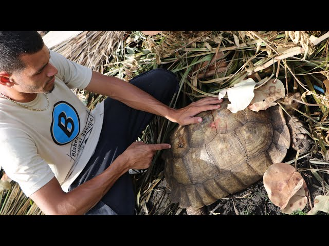 Turtle Rescue Mission!! From Someone With A Hammer