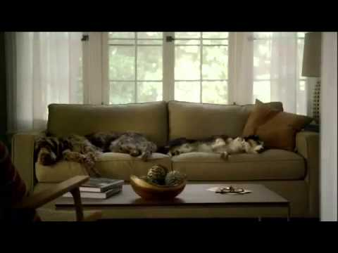 Purina Commercial for Purina Pro Plan (2013 - 2014) (Television Commercial)