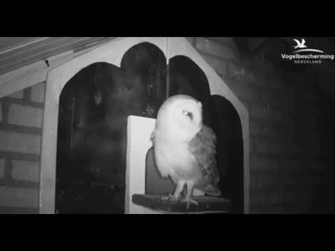 Nestkast inspectie - 9 maart 2017