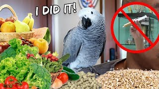 Yay! My Bird is Finally Weaned! | Vlog #336