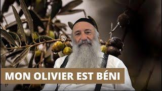 MON OLIVIER EST BÉNI - Planter un Olivier chez soi