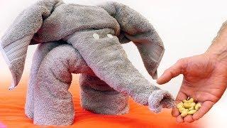 How to Make a Towel Elephant - Video Youtube