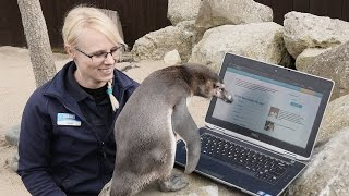 Lonely Penguin Joins Dating Site Plenty of Fish to Find a Mate