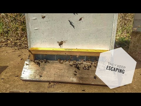 , title : '#BEEKEEPING: Como Hive, April 18th, 2020