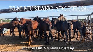 BLM MUSTANG ADOPTION | Picking Out My New Mustang