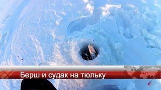 Ловля берша на каме зимой