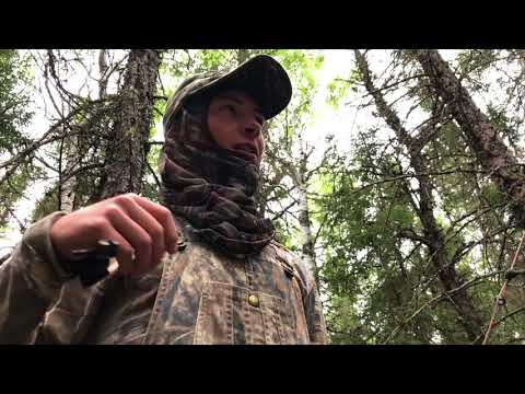 Manitoba Black Bear Hunting