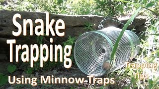 Snake Trapping with Minnow Traps