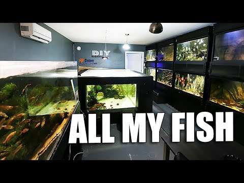 All my aquariums tour