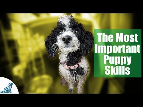 First Week Puppy Training - The 6 Skills To Teach First ... - YouTube