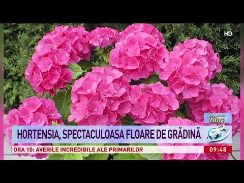 Condyloma acuminatum causes