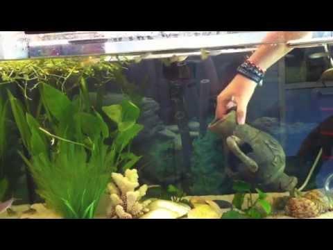 Anleitung: Putzen und Reinigen vom Aquarium - Wasserbecken säubern