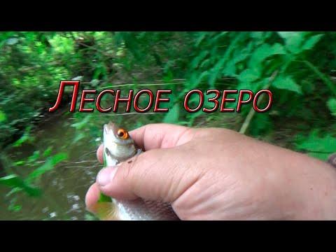 Нашёл в лесной глуши озеро! Отличное место для рыбалки.
