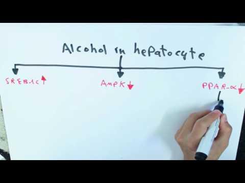 อาการยา Giardia และการรักษา