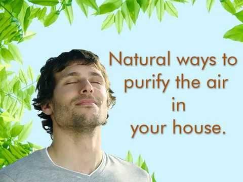 Video Natural Air Purifier Alternatives to Purify Air at Home