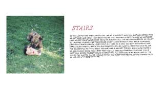 "Joyce Manor - ""Stairs"" (Full Album Stream)"