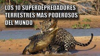Los 10 Superdepredadores Terrestres Más Poderosos Del Mundo