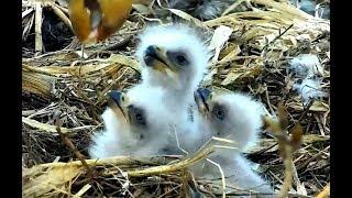 Breakfast at Decorah Eagles nest. 07.55 / 06 April 2018