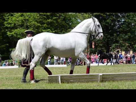 , title : 'The Day of Horses, National Stud Slatinany, old Kladrub's horses