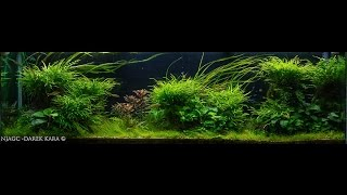 Aquascaping Contest, Meet the Competitors 5 of 8