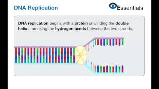 Essentials Video Animation - DNA Replication