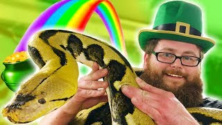 HUGE PYTHON HELPS A LEPRECHAUN FIND HIS GOLD! **St Patricks Day** Brian Barczyk