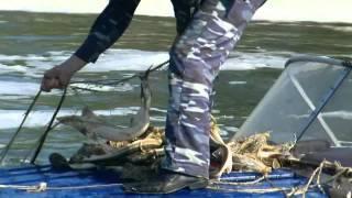 Московско-окское территориальное управление федерального агентства по рыболовству