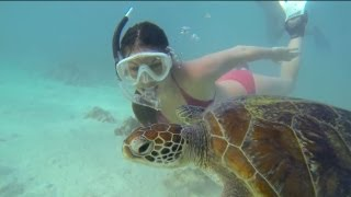Teeming with wildlife, Vlasoff Cay on the Great Barrier Reef becomes a playground for two friends. Watch out for the incredibly inquisitive juvenile turtle, who playfully interacts with the snorkelers and even tries to take a bite out of the GoPro!
