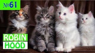 ПРИКОЛЫ 2017 с животными. Смешные Коты, Собаки, Попугаи // Funny Dogs Cats Compilation. Март №61