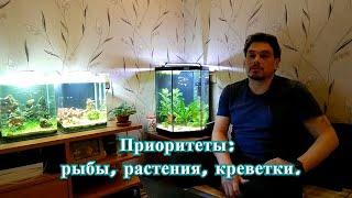 Приоритеты: рыбы, растения, креветки.