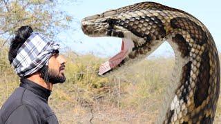 Anaconda Snake 2 in Real Life HD Video
