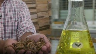Ulat Jadi Bahan Baku Minyak Goreng, Penemu Beberkan Proses Pembuatan hingga Harapan Selamatkan Hutan