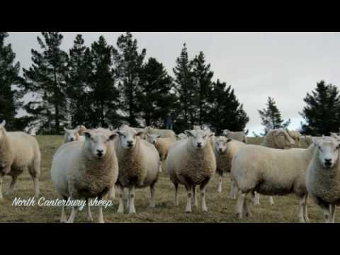 NEW ZEALAND-Scenic journey