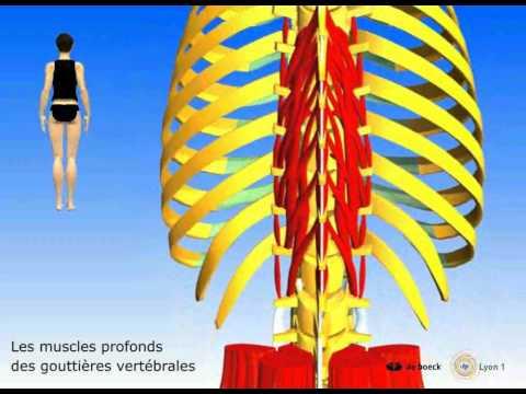 Comme développer les muscles supérieurs des pieds