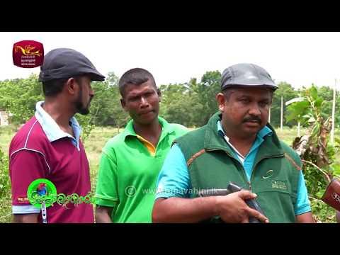 Sobadhara - සොබාධාරා | Season 2 | Episode - 21 | 2018-06-15 | Rupavahini Documentary