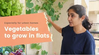 Vegetables You Can Grow In Pots In A Flat  Success And Failures
