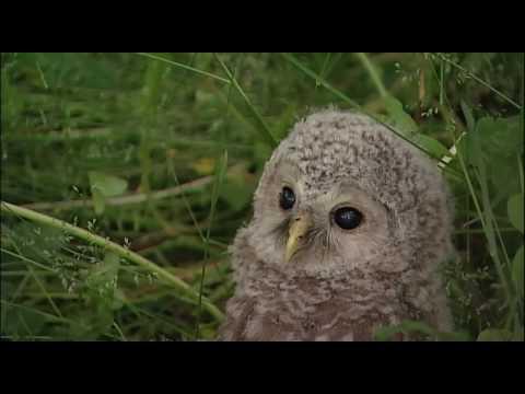 An Owlish Afternoon - Precious!
