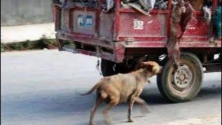 Chó hoang đuổi theo xe tải hơn 100 mét không ngừng sủa, khi nó quay lại khiến mọi người rơi lệ