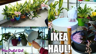 Installing New Orchid Displays From IKEA!