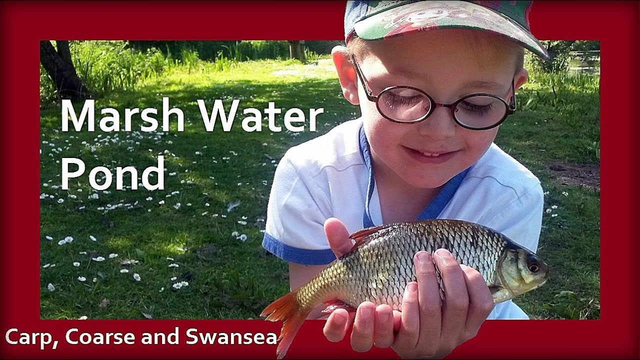 A Few Hours at Marsh Water Pond. Kidwelly. Carp, Coarse and Swansea Video 138