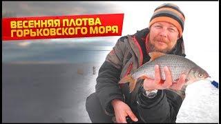 Ловля плотвы на горьковском водохранилище зимой