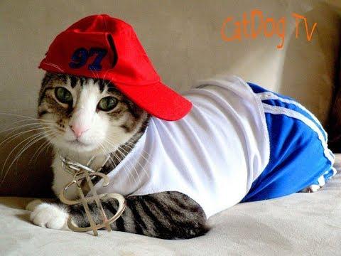 Смешное видео с котиками (Funny Cat)