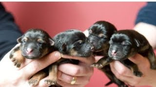 Man Saves Tiny Pups, But Then Realizes They're Definitely Not Dogs