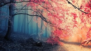Sound Effects In The Forest - Efek Suara Dalam Hutan