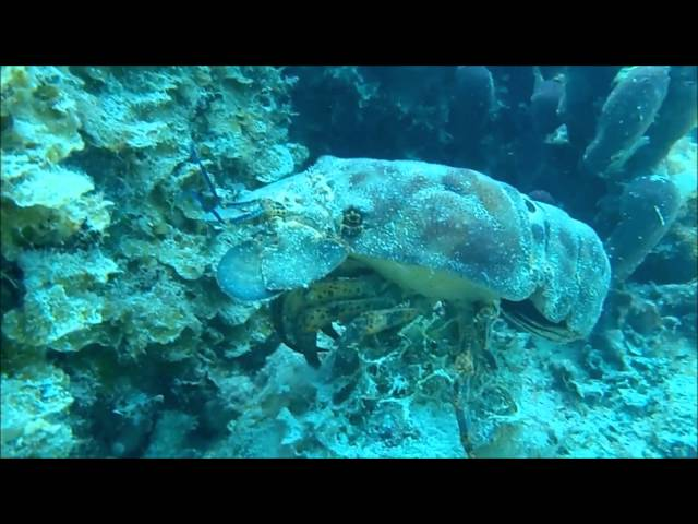 Beach Snorkeling/Diving Turks and Caicos (Smith Reef)